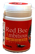 korm_Benibachi Red Bee Ambitious